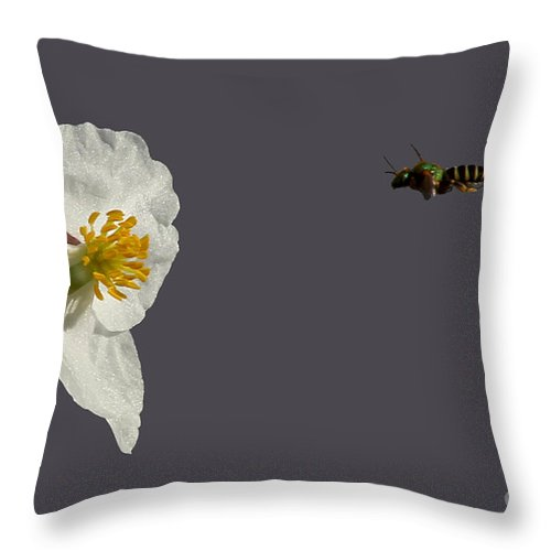Broadleaf Arrowhead Throw Pillow featuring the photograph Flying In For Breakfast by Meg Rousher