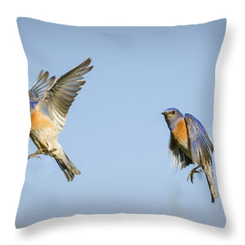 Birds Throw Pillow featuring the photograph Flying by Jean Noren