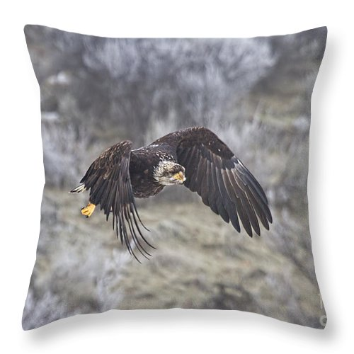 Eagle Throw Pillow featuring the photograph Flying Low by Mike Dawson