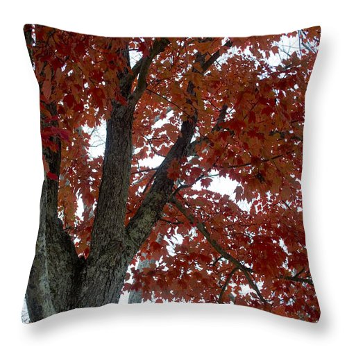 Fog Throw Pillow featuring the photograph Fog-filled Fall by Breanna Calkins