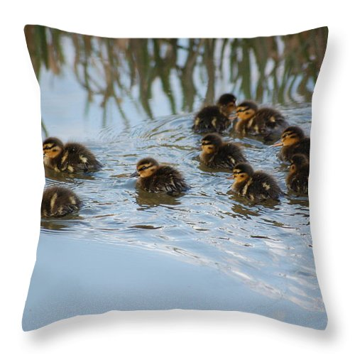 Ducklings Throw Pillow featuring the photograph Follow The Leader by Harvey Scothon