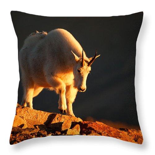 Mountain Goat Throw Pillow featuring the photograph Follow The Sun by Jim Garrison