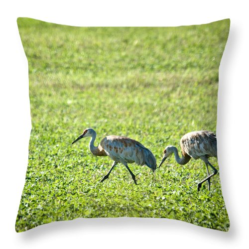 Sandhill Cranes Throw Pillow featuring the photograph Foraging by Cheryl Baxter