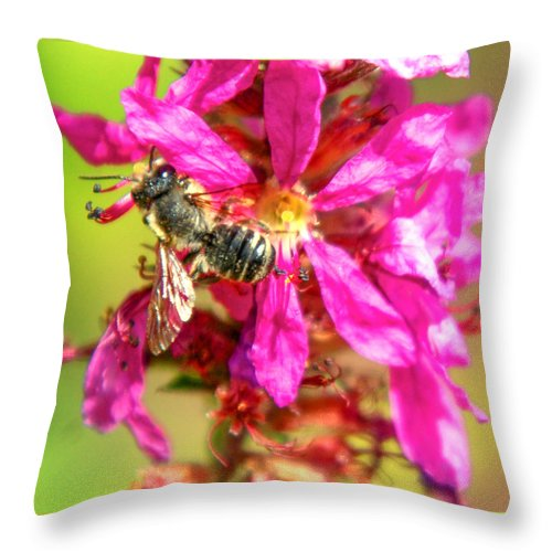 Purple Wild Flower Throw Pillow featuring the photograph Foraging by Optical Playground By MP Ray