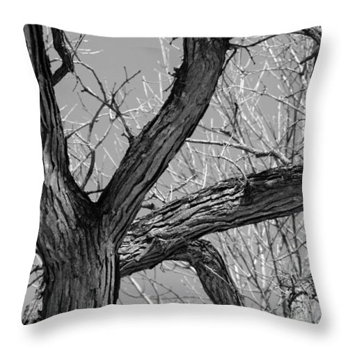 Tree Forest Nature Landscape Season Summer Fall Autumn Winter Leaf Leaves Bark Black White Modern Abstract Ansel Adams Jackson Pollack Paschke Skye Osnat Bold Color Colorful Throw Pillow featuring the photograph Forest #2 by Daniel Solone