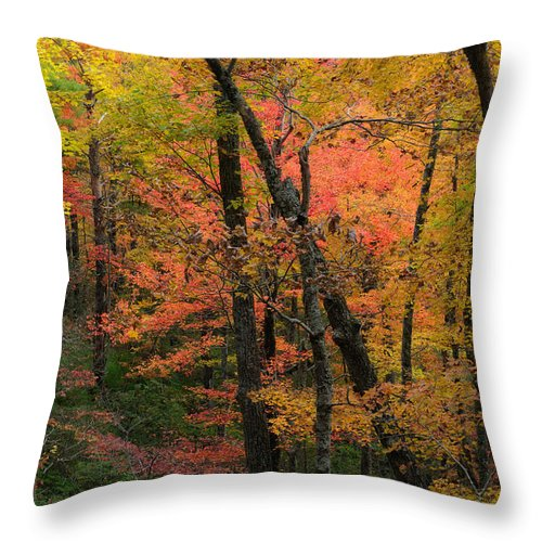 Cades Cove Throw Pillow featuring the photograph Forest Blush by Charlie Choc