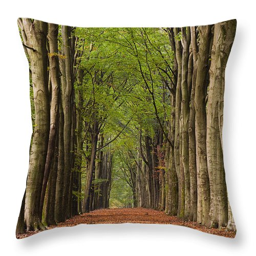 Trees Throw Pillow featuring the photograph Forest In The Fall by David Lichtneker