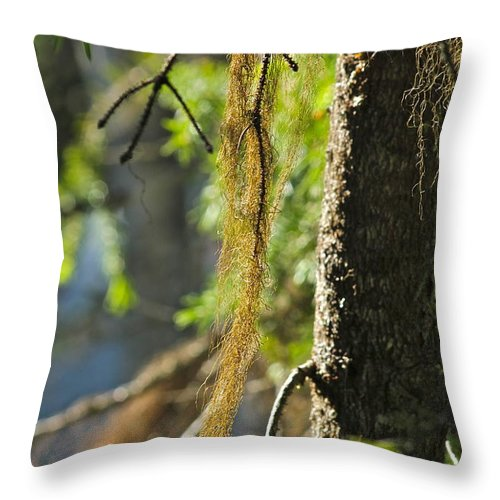 Tree Throw Pillow featuring the photograph Forest Moss by Rick Monyahan