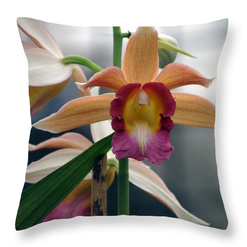 Orchid Throw Pillow featuring the photograph Forward by Debi Singer