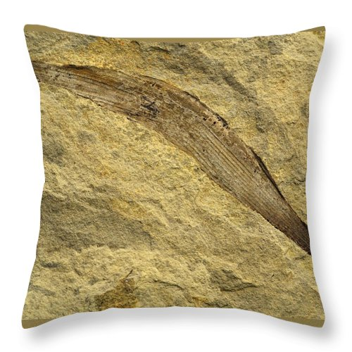 Creamcolor Throw Pillow featuring the photograph Fossil Leaves by Jozef Jankola