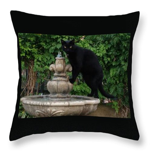 Cat Throw Pillow featuring the photograph Fountain Cat by Alison Stein