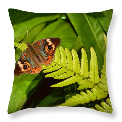 Butterfly Throw Pillow featuring the photograph Four Eye Butterfly by Amy Lucid