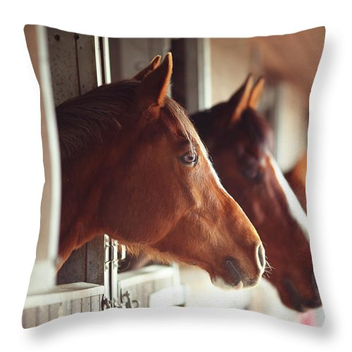 Horse Throw Pillow featuring the photograph Four Horses In Stables by Olivia Bell Photography