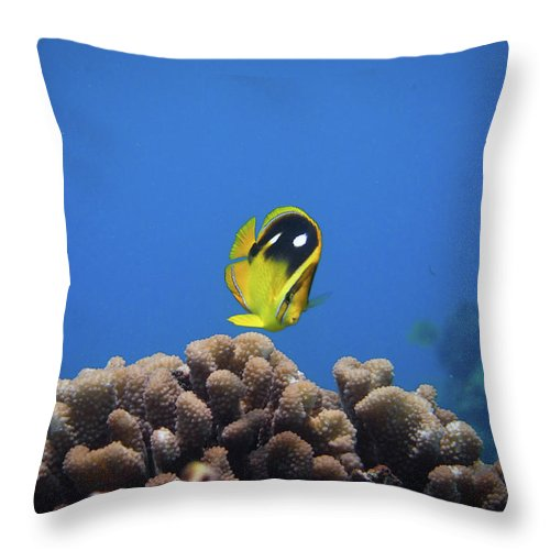 Underwater Throw Pillow featuring the photograph Four Spot Butterfly by Taiki Sakai