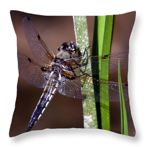 Four-spotted Skimmer Throw Pillow featuring the photograph Four-spotted Skimmer by David Salter