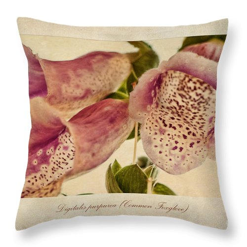 Foxglove Painting Throw Pillow featuring the painting Foxglove Textures by John Edwards