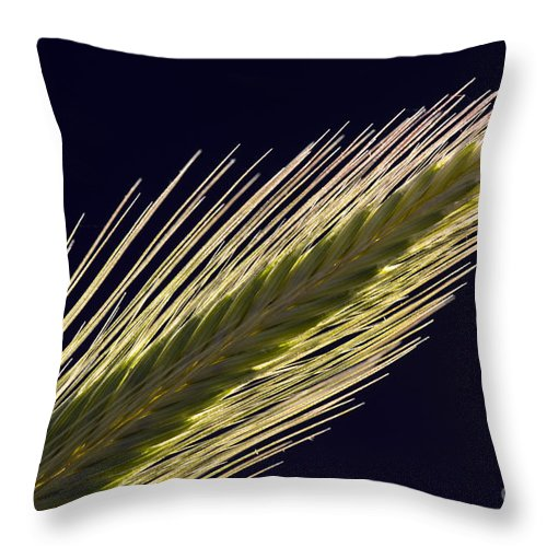 Flora Throw Pillow featuring the photograph Foxtail Barley by John Shaw