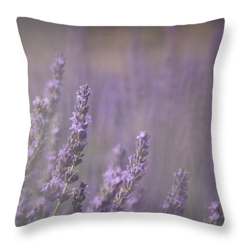 Fragrance Throw Pillow featuring the photograph Fragrance by Lynn Sprowl