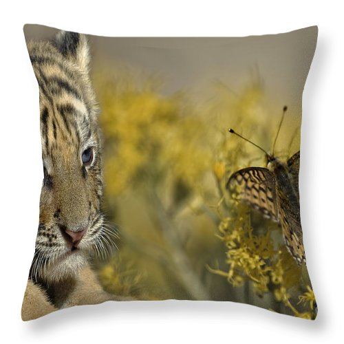 Tiger Throw Pillow featuring the photograph Free From Evil by Wildlife Fine Art