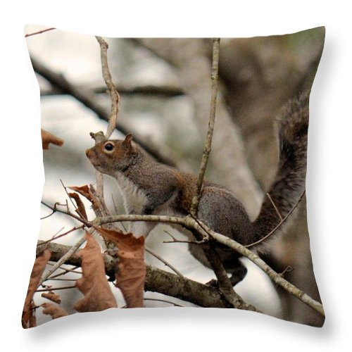 Freeze Frame Throw Pillow featuring the photograph Freeze Frame by Maria Urso