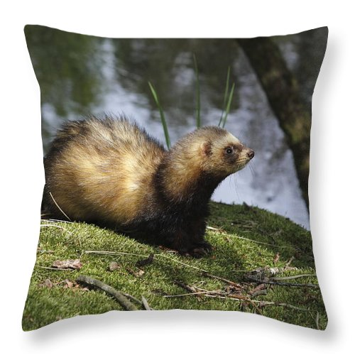 Ferret Throw Pillow featuring the photograph Fret On The Bank Of A Pond In Drenthe Netherlands by Ronald Jansen