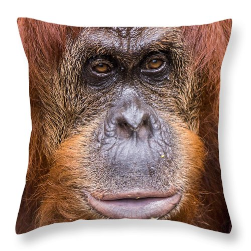 Monkey Throw Pillow featuring the photograph Friendship Card by Edward Fielding
