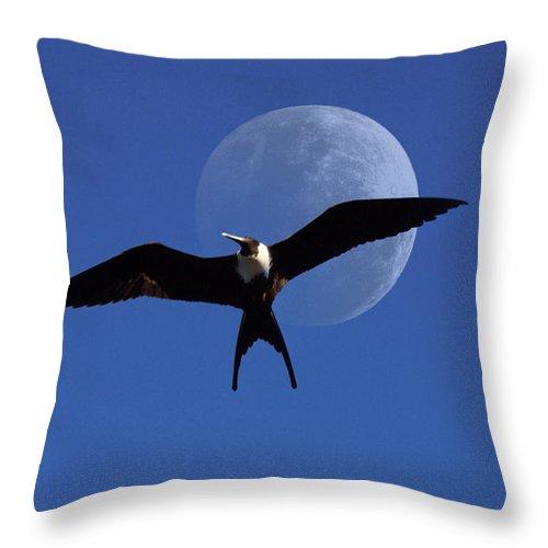 Frigate Throw Pillow featuring the photograph Frigatebird Moon by Jerry McElroy