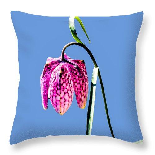 Fritillaria Meleagris Throw Pillow featuring the photograph Fritillaria Meleagris - Leif Sohlman by Leif Sohlman