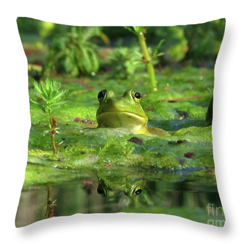 Frog Throw Pillow featuring the photograph Frog by Douglas Stucky
