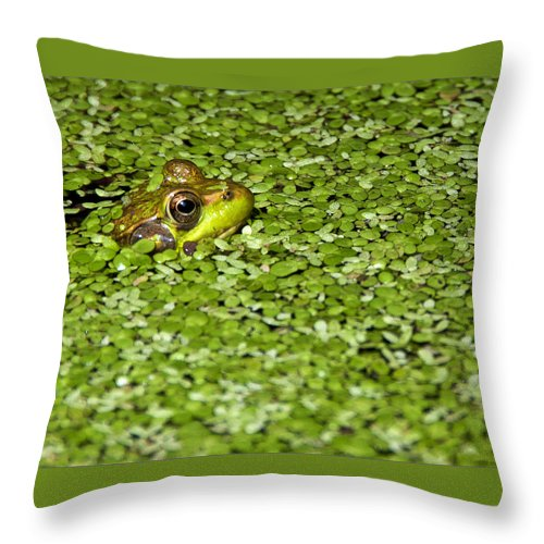 Wildlife Throw Pillow featuring the photograph Frog In Duckweed by Alida Thorpe