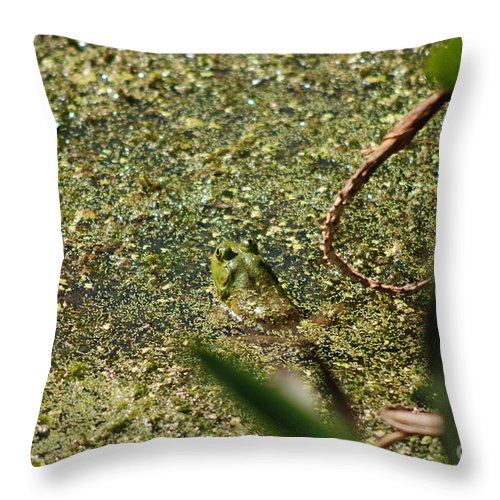 Animal. Frog Throw Pillow featuring the digital art Frog In Pond by Eva Kaufman