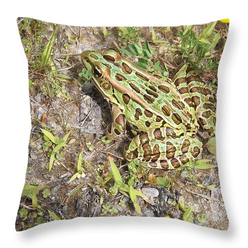 Frog Throw Pillow featuring the digital art Frog by Kevin Sweeney