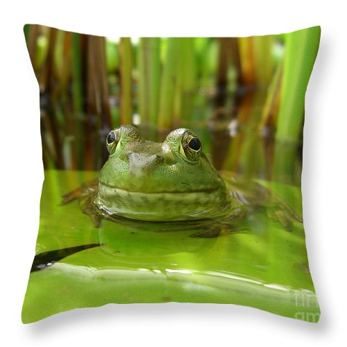 Frog Throw Pillow featuring the photograph Frog On Lily Pad by Jack Schultz