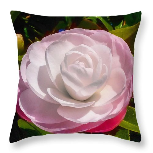 Flower Throw Pillow featuring the photograph From Red To White by Steve Taylor