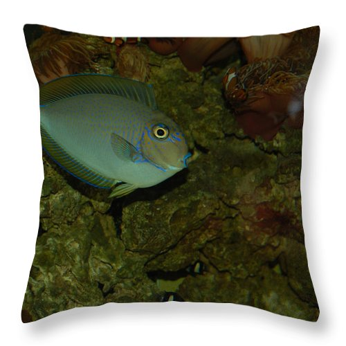 Fish Throw Pillow featuring the photograph From The Deep by Suzanne Gaff