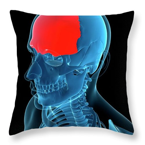 Anatomy Throw Pillow featuring the digital art Frontal Bone, Artwork by Sciepro
