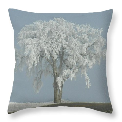 Landscape Throw Pillow featuring the photograph Frost Covered Lone Tree by Penny Meyers