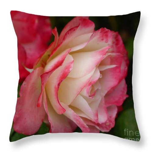 Rose Throw Pillow featuring the photograph Frosted Rose by Christiane Schulze Art And Photography