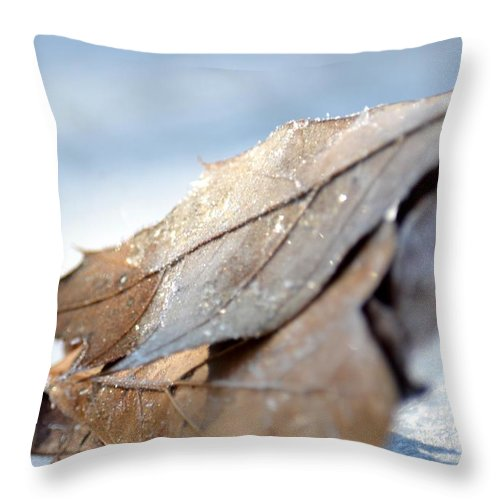 Frosty Leaves In The Morning Sunlight Throw Pillow featuring the photograph Frosty Leaves In The Morning Sunlight by Maria Urso