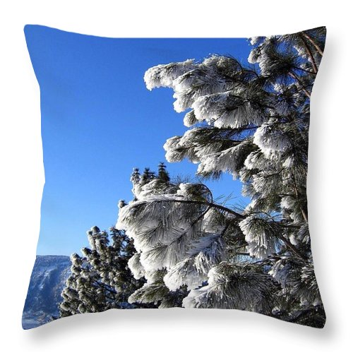 Frost Throw Pillow featuring the photograph Frosty Limbs by Will Borden