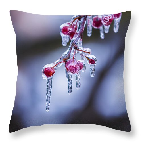 Berry Throw Pillow featuring the photograph Frozen Berries by John McGraw