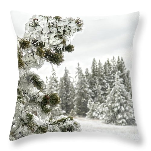 Pine Tree Throw Pillow featuring the photograph Frozen Forest by Wildlife Fine Art