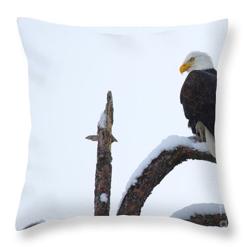 American Bald Eagle Throw Pillow featuring the photograph Frozen Perch by Mike Dawson