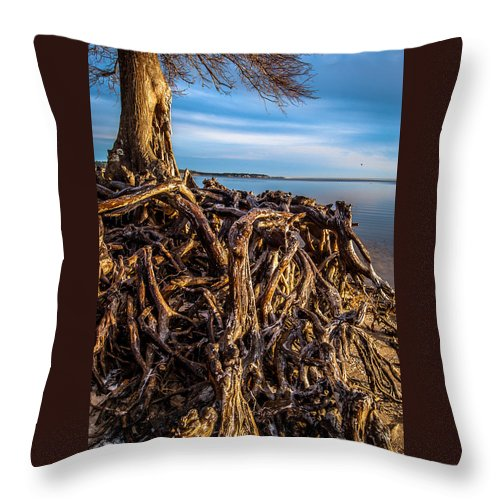 Florida Throw Pillow featuring the photograph Frozen Roots by Jon Cody