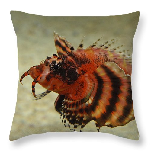 Aquarium Throw Pillow featuring the photograph Fu Manchu Lionfish by John Shaw