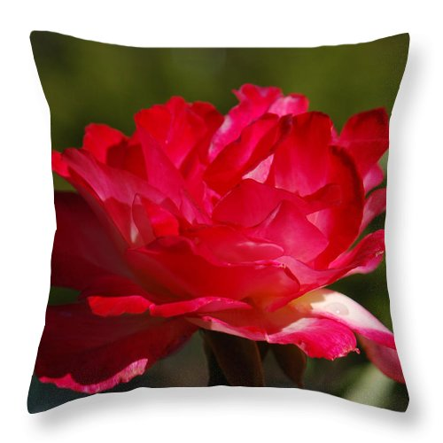 Floral Throw Pillow featuring the photograph Fuchsia by Suzanne Gaff