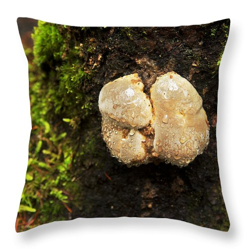 Nature Throw Pillow featuring the photograph Funghi by Belinda Greb