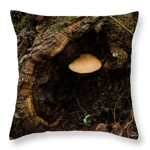 Fungus Throw Pillow featuring the photograph Fungus In A Knothole by Douglas Barnett