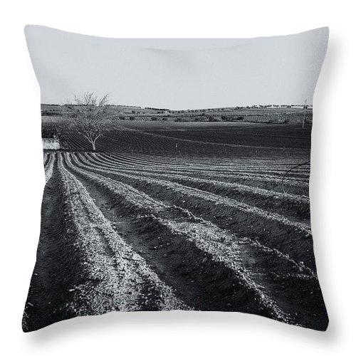 Furrow Throw Pillow featuring the photograph Furrows by Alfio Finocchiaro