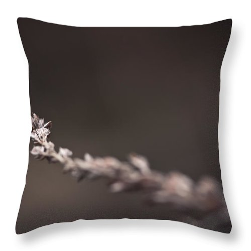 Winter Throw Pillow featuring the photograph Further by Shane Holsclaw